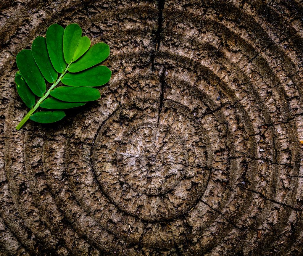 Drewno okrągłe - przekrój
